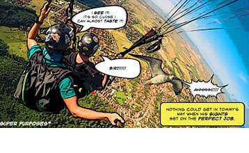 Two men paraglide to look for the perfect job when they bump into a bird
